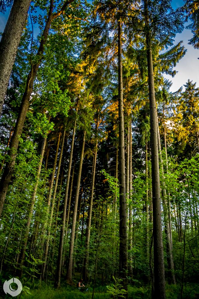 las muzycznie
